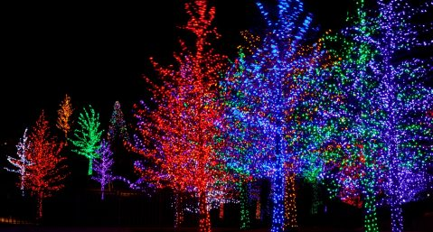 trees at a park city christmas event
